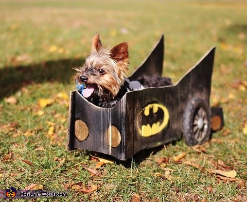 To the Rescue!, Batman in Batmobile Dog Costume