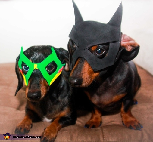 Batman and Robin Costumes & Dogs Batman and Robin Costumes