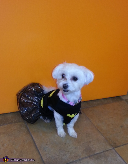 Diamond !, Batgirl and Lion Dog Costume