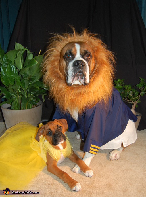 Beauty and the Beast Dogs Costume