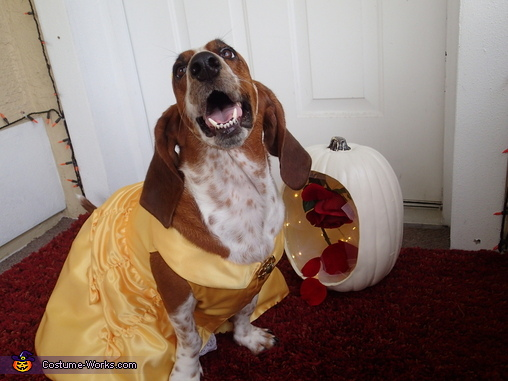 Lotus as Belle, Beauty and the Beast Costume