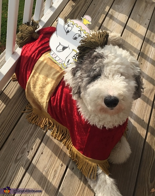 Beauty and the Beast Sultan Costume