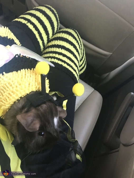 Bee Keeper and his Bees Homemade Costume
