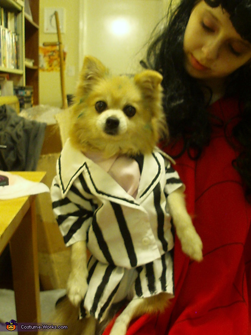 Beetlejuice and Lydia - Homemade costumes for pets