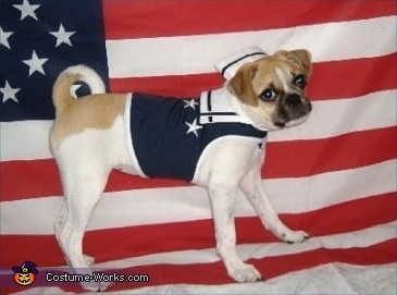 U.S. Navy - Homemade costumes for pets