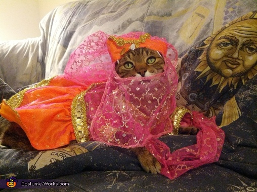 Belly Dancer Cat Costume