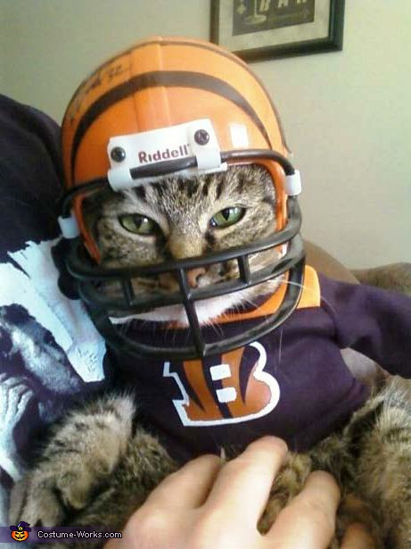 The Bengals - Homemade costumes for pets
