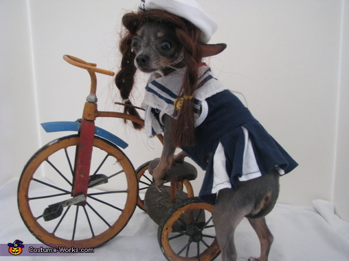 Bicycle Dog Costume