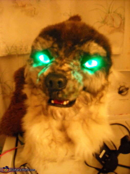 Testing the eyes before putting my head on for the night., Big Bad Wolf Escaped Costume