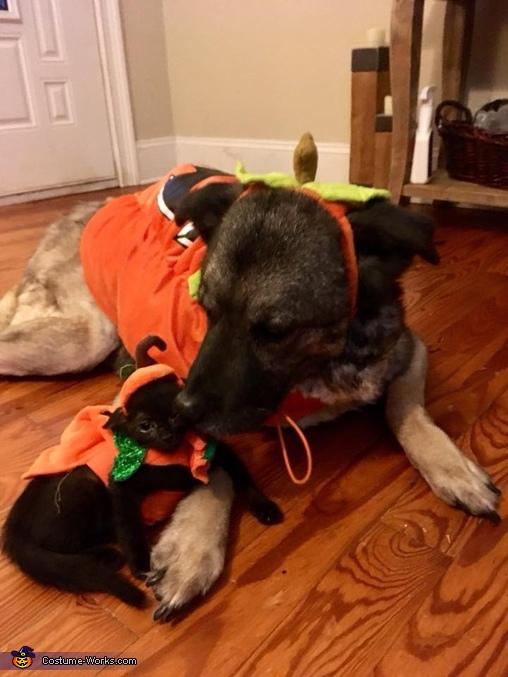 Biggest and Littlest Pumpkins Costume