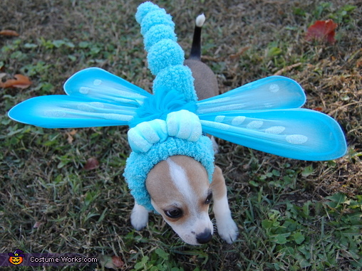 Blue Dasher Dragonfly - Homemade costumes for pets