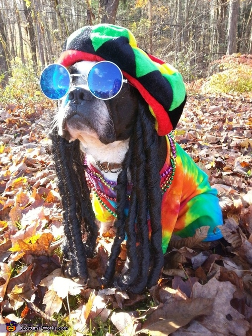 Bob Marley Dog Costume