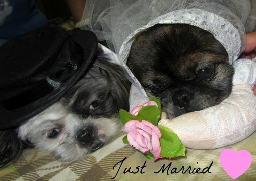 Bride and Groom Dog Costume