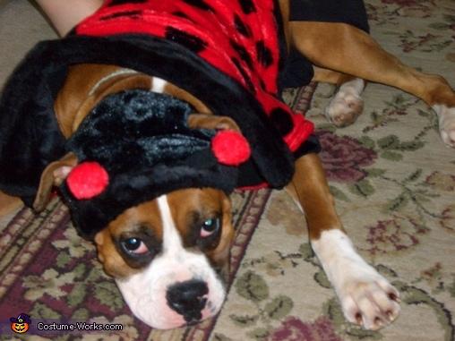 Buggy Costume