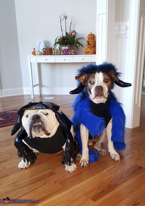 Bulldog Black Widow and Tarantula Costume