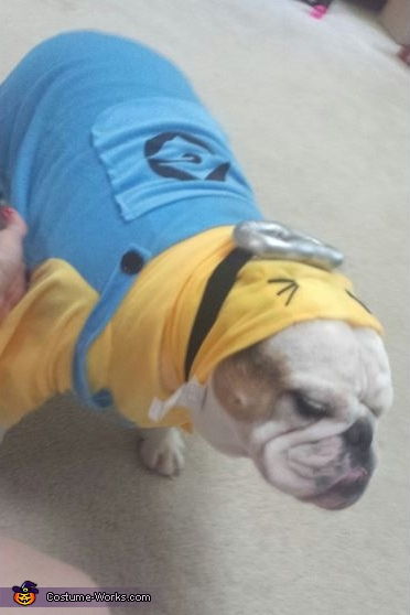 Bulldog Minion Costume