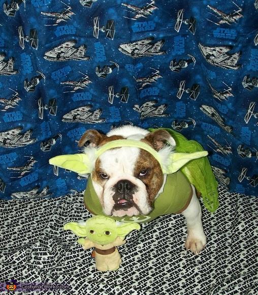 Bulldog Yoda Costume