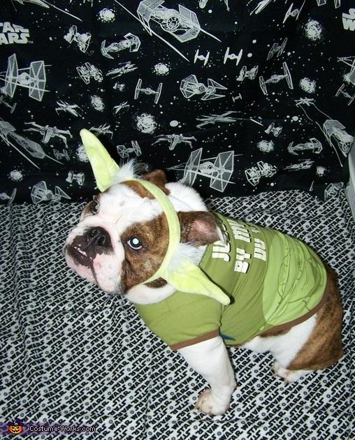 Yoda Buttercup, Bulldog Yoda Costume