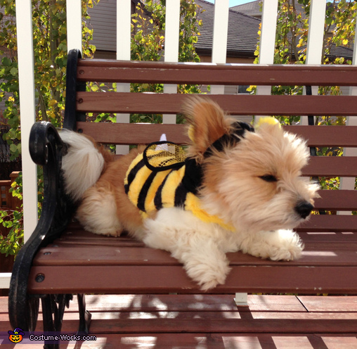 Bumble Bee Puppy Costume