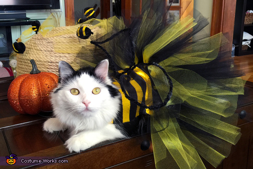 Sophie, Bumble Bee Cat Costume