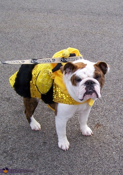 Buttercup the Bumblebee Costume
