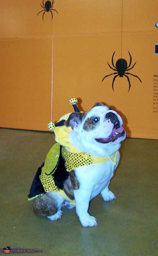 Buttercup the Bumblebee, Buttercup the Bumblebee Costume