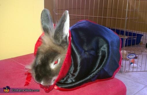 Bunnicula the Vampire Bunny Costume