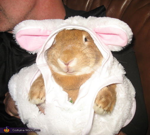 Bunny Bunny Costume