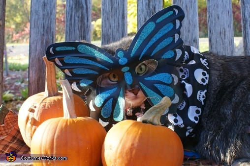 Butterfly Cat Costume