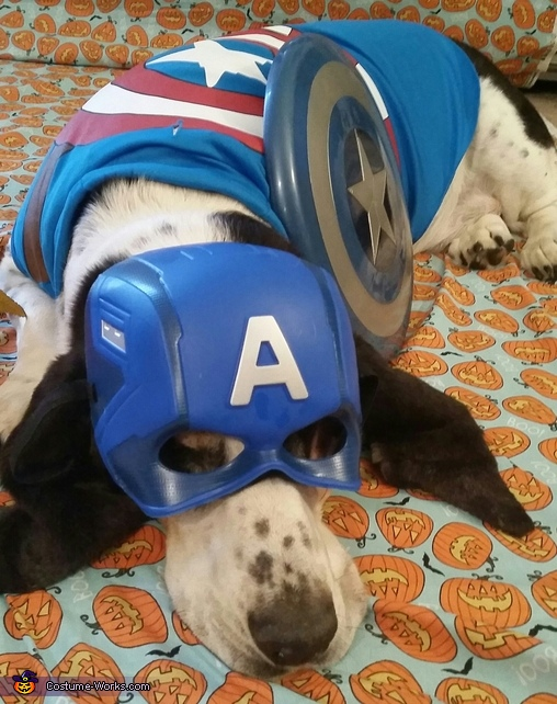 Bailey the Captain America Costume