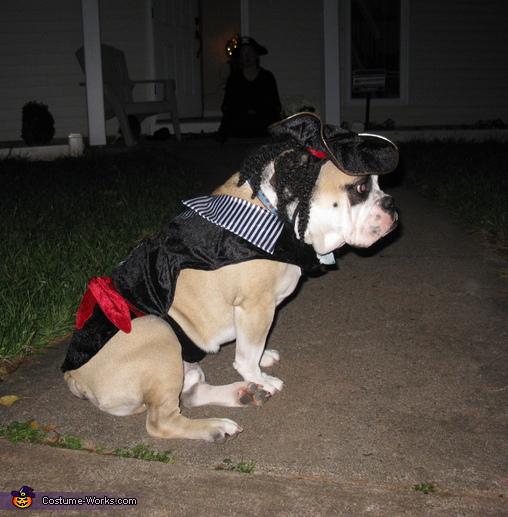 Dog Captain Jack Sparrow Costume
