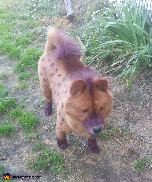 Cartoon Hyena Dog Homemade Costume
