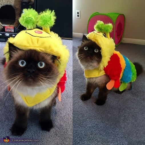 Cat-erpillar Costume