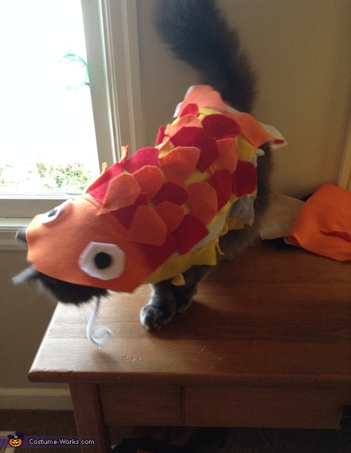 Trying it on, Cat Fish Costume