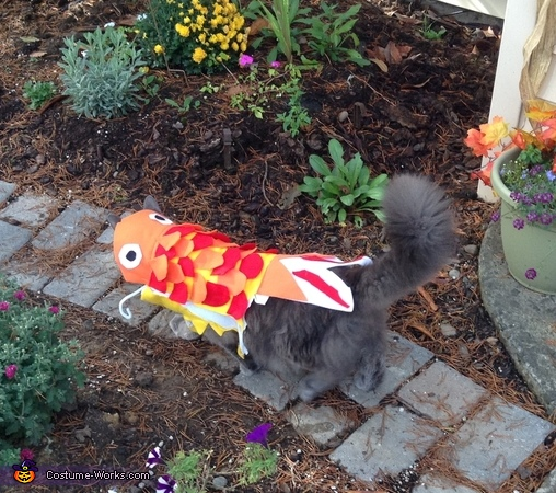 Finished product, Cat Fish Costume