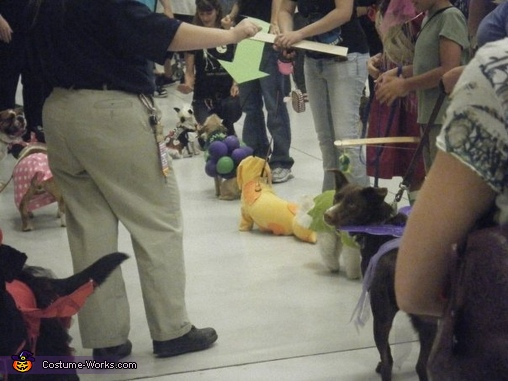 chilling at a contest, CatDog Costume