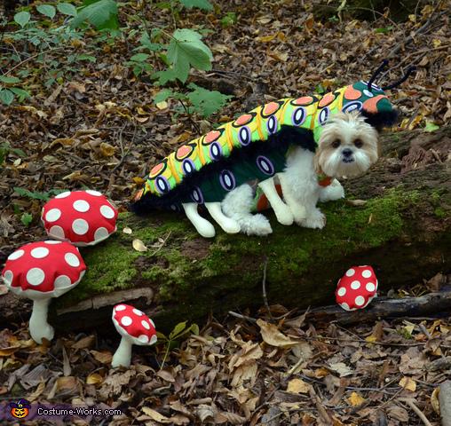 DOGerpillar Costume