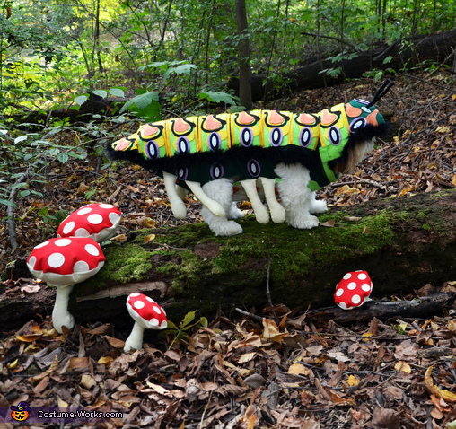 Pachino the DOGerpillar (2), DOGerpillar Costume