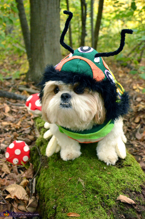 Pachino the DOGerpillar (3), DOGerpillar Costume