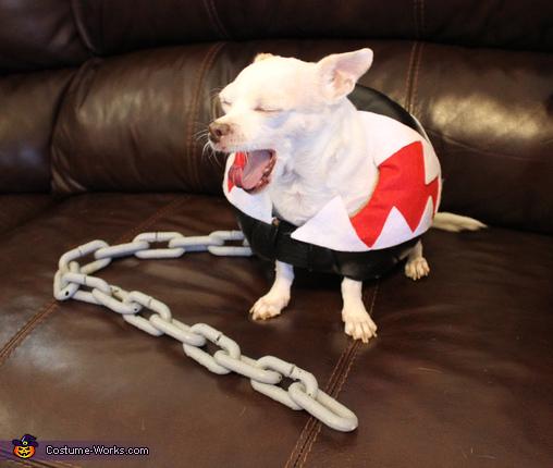 Chain Chomp, Chain Chomp Dog's Costume