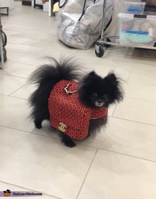 Chanel Dog, Chanel Bag Dog Costume