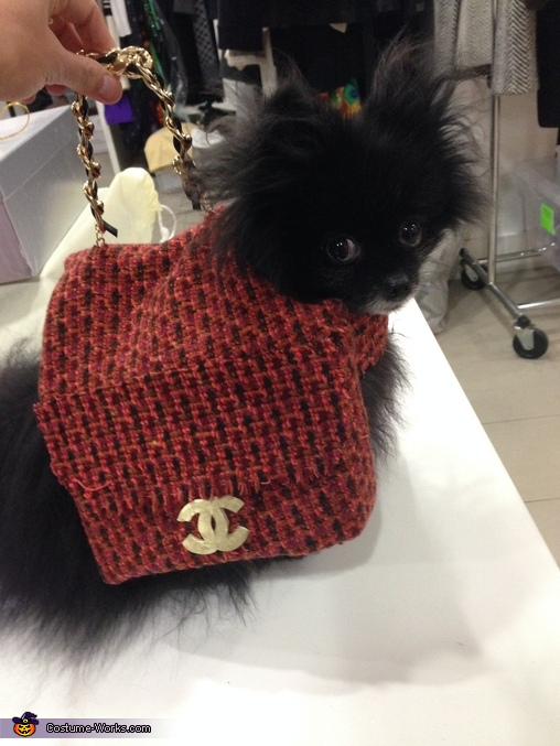 Carry me, I'm the chicest accessory!, Chanel Bag Dog Costume
