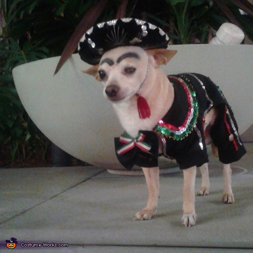 Charro Dog Homemade Costume