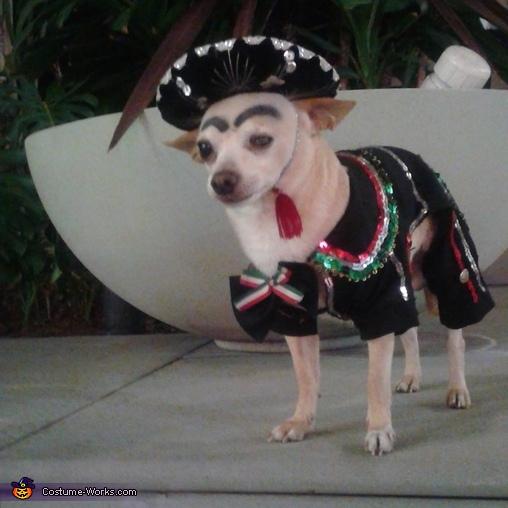 Charro Dog Homemade Costume