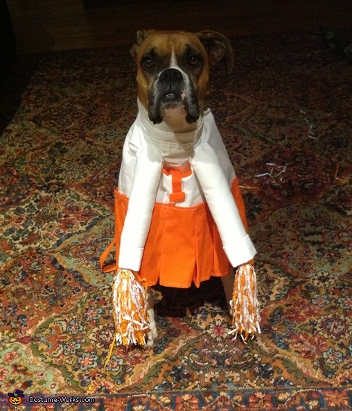 Cheerleader - Homemade costumes for pets