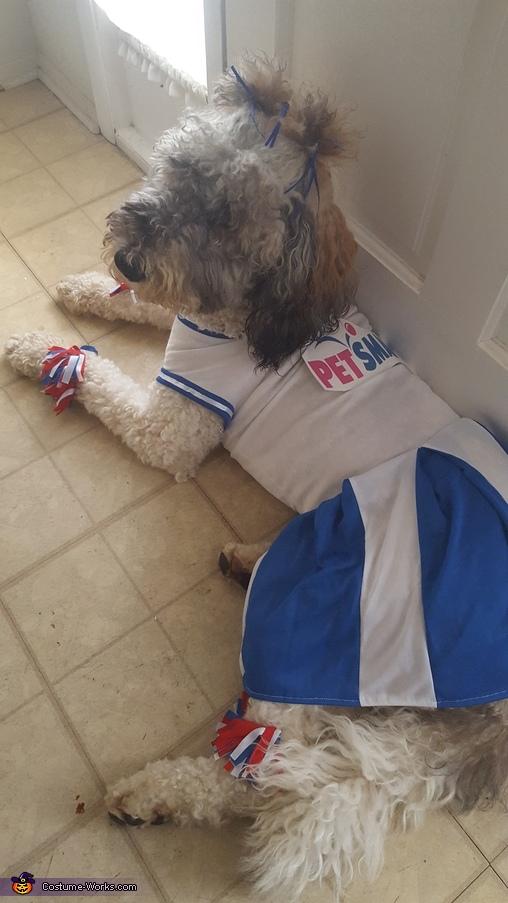 PetSmart Cheerleader Costume