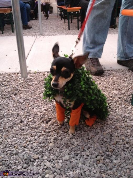 Sophie, Chia Chihuahuas Costume