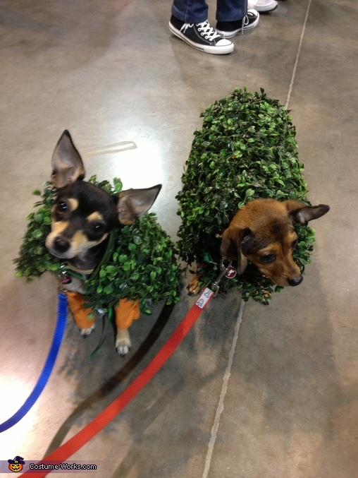 Chia Chihuahuas together, Chia Chihuahuas Costume