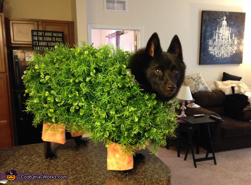 Chia Pet Dog Costume Diy
