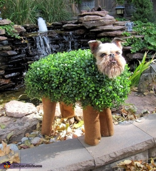 Diy Chia Pet Costume Costumes